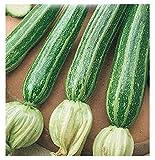 40 aprox - San Pasquale Zucchini Samen - Cucurbita Pepo In Originalverpackung Made in Italy - Zucchini