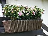 Balkonkasten PRIMO 60x20x16cm aus Polyrattan in mokka mit Kunststoff-Einsatz und Ablauf Pflanztrog Pflanzkübel Blumenkübel Pflanztröge