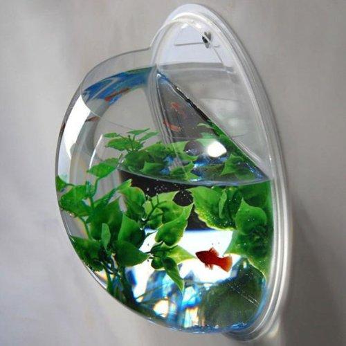 Fischglas zur Wanddekoration