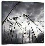 Düsteres Gras vorm Regen, Format: 40x40 auf Leinwand, XXL riesige Bilder fertig gerahmt mit Keilrahmen, Kunstdruck auf Wandbild mit Rahmen, günstiger als Gemälde oder Ölbild, kein Poster oder Plakat