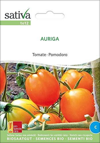 Sativa Rheinau to12 Tomate Auriga (Bio-Tomatensamen)
