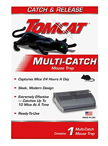 Tomcat Leben Fangen Mausefalle -
