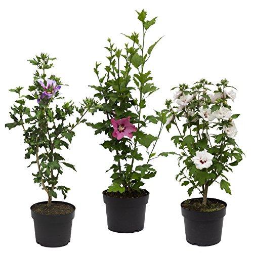 Dominik Blumen und Pflanzen 224403