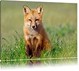Pixxprint Kleiner Fuchs Format: 80x60 auf Leinwand, XXL riesige Bilder fertig gerahmt mit Keilrahmen, Kunstdruck auf Wandbild mit Rahmen, günstiger als Gemälde oder Ölbild, kein Poster oder Plakat