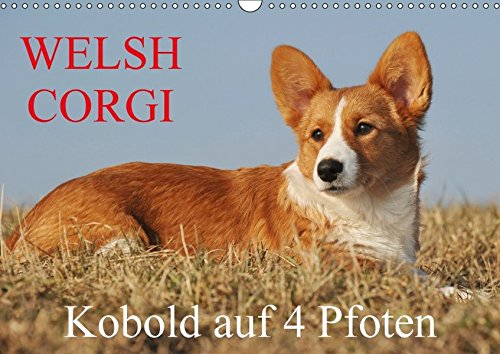 Welsh Corgi - Kobold auf 4 Pfoten (Wandkalender 2018 DIN A3 quer): Welsh Corgi Pembroke und Cardigan in beiden Haarvariationen - in Fotos festgehalten ... [Kalender] [Apr 01, 2017] Starick, Sigrid