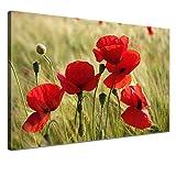 LANA KK - Leinwandbild Mohnblumen mit Blumen auf Echtholz-Keilrahmen – Frühling und Natur Fotoleinwand-Kunstdruck in rot, einteilig & fertig gerahmt in 100x70cm