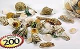 Set 3 sacchetti da 200 gr di conchiglie decorative naturali per composizioni fiori secchi, decoupage, acquari