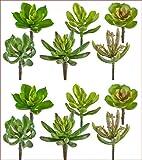 Kunstpflanze SUKKULENTEN- MIX ca 10 cm. 12 Stück Sukkulenten, Fettpflanzen.