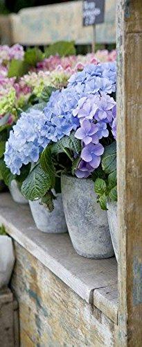 Banner - Thema: Frühling / Sommer - Hortensien - 180cmx75cm - zum Hängen & Dekorieren