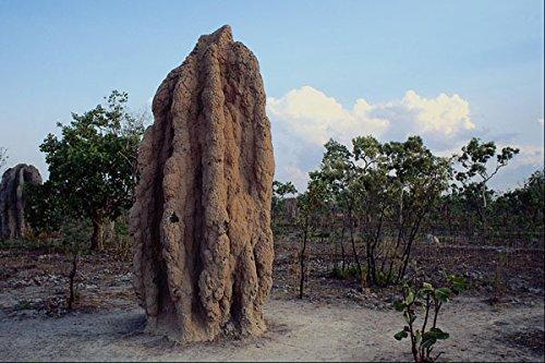 664000-giant-termite-mound-northern-territory-australia-a4-photo-poster-print-10x8