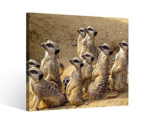 Leinwandbild 1Tlg Erdmännchen Afrika Wüste Surikate Leinwand Leinwandbilder Bild Bilder Holz gerahmt 9U1830, BxH Format:80x80cm