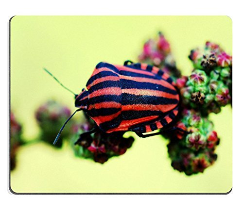 insetti-volanti-insetti-mecoptera-hexapoda-qzone-customized-made-to-order-cloth-with-neoprene-rubber