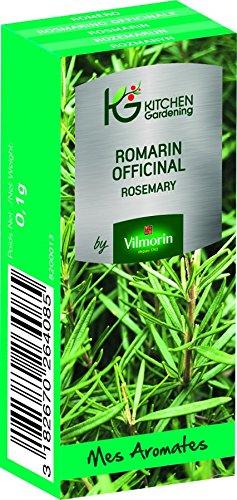 KG BY VILMORIN 8200013 Jardinières Romarin officinal Vert 7 x 3 x 2 cm