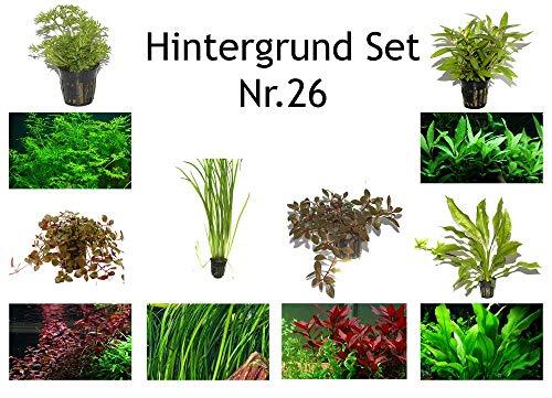 Hintergrund Set mit 6 Tropica Topf Pflanzen Aquariumpflanzenset Nr.26 Wasserpflanzen Aquarium Aquariumpflanzen
