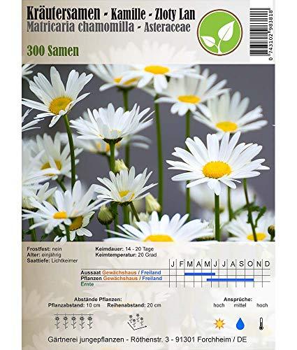 Kräutersamen - Kamille/Matricaria chamomilla - verschiedene Sorten(Zloty Lan)