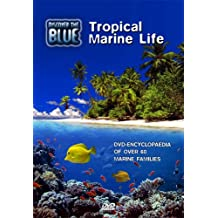Discover the Blue-Tropical Marine Life