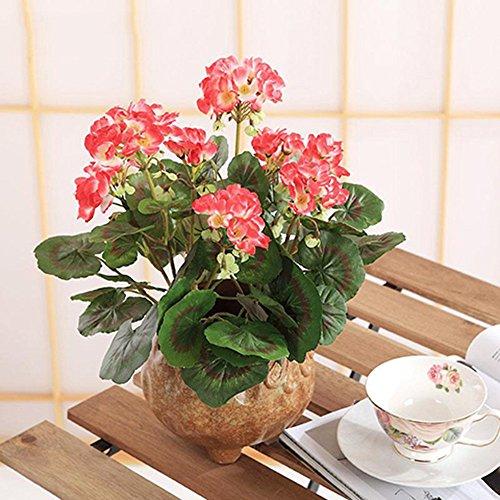 lumen Kreative Pflanzen Topfpflanzen Home Decoration Kit, Rot (Herbst-tabelle Mittelstücke)