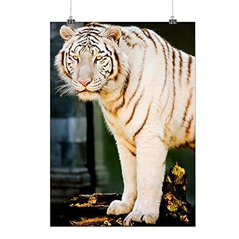 Siberian Tiger Rare White Cat Matte/Glossy Poster A3 (42cm x 30cm) | Wellcoda