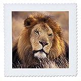 3drose QS _ 84670_ 10Afrika Stecker African Lion