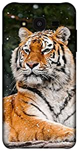 The Racoon Grip printed designer hard back mobile phone case cover for Samsung Galaxy J5. (snow tiger)