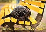 Diesel, der schwarze Mops (Wandkalender 2019 DIN A4 quer): Diesel ein kleiner, frecher aber liebenswerter schwarzer Mops. (Monatskalender, 14 Seiten ) (CALVENDO Tiere)