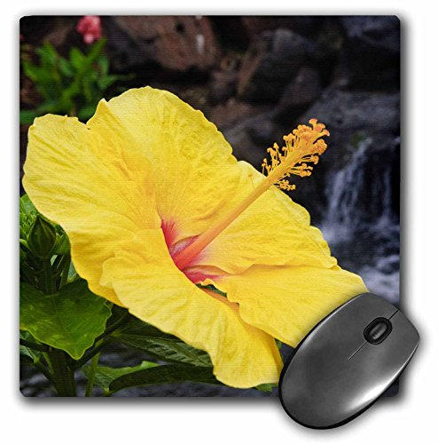 Danita Delimont - Hawaii - Hibiscus flower the Big Island Hawaii - US12 MDE0069 - Michael DeFreitas - MousePad (mp_89820_1)