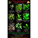 25 Live Aquarium Plants/9 Different Kinds - Amazon Swords, Anubias, Java Fern, Ludwigia and much more! Great plant… 11