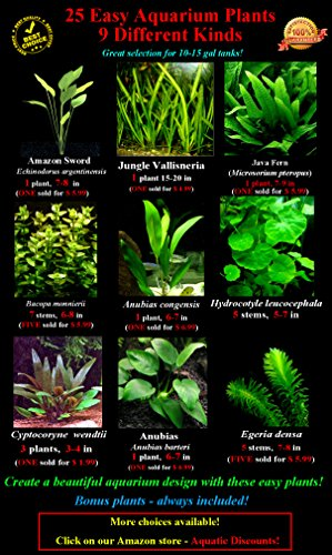 25 Live Aquarium Plants/9 Different Kinds - Amazon Swords, Anubias, Java Fern, Ludwigia and much more! Great plant… 2