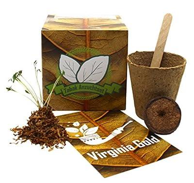 Geschenk-Anzuchtset Tabak - Echte Virgina Gold Tabaksamen - Nicotiana tabacum - Geschenk Für Raucher - Witziges Geburtstagsgeschenk von limondo auf Du und dein Garten