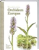 Wunderschöne Orchideen Europas