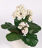Set 3 x Künstliche Wickelwurz Pflanze MUNA auf Steckstab, rosa, 40 cm - Deko Bergenie / Kunstblume - artplants