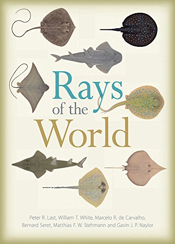 rays-of-the-world