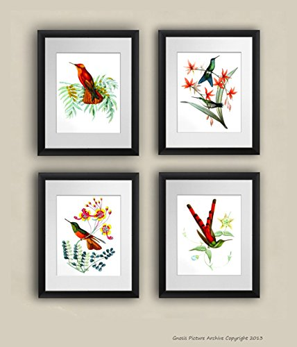 Antike Vogel-prints (Gnosis Picture Archive 'Kolibri Art Prints Set von 4Bild gerahmt Antik Natural History Vogel Illustrationen Home Decor)