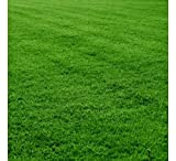 Lawn Grass Seeds Review and Comparison