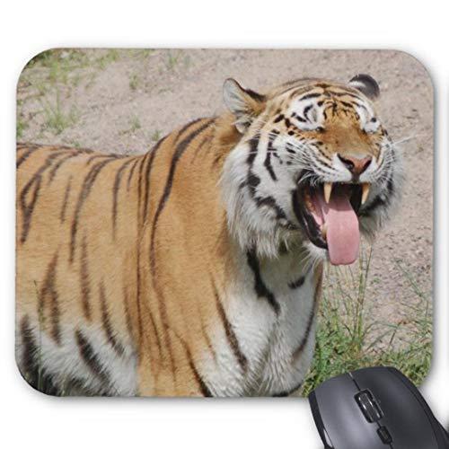 Mauspad mit seidenweicher Textiloberfl?che - (antistatische Wirkung - perfekte Gleiteigenschaft - Abma?e: 200 x 200 x 0,3 mm (B x H x T)) PC / Computer Mousepad-Sagen K?se Tiger Mousepad