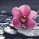Artland Qualitätsbilder I Glasbilder Deko Glas Bilder 50 x 50 cm Botanik Blumen Orchidee Foto Pink Rosa A6NH Stillleben Kiesel Orchidee