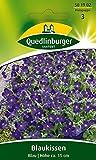 Blaukissen Blau von Quedlinburger Saatgut