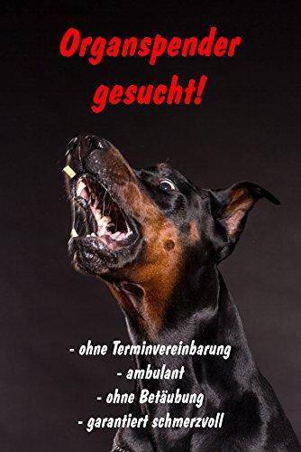 Schild Warnschild Achtung Dobermann - Organspender gesucht - Hund Hundeschild 30x20cm Hartschaum Aluverbund -S25R