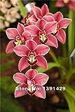 100pcs 22 Farben Seltene Cymbidiumorchidee, afrikanische Cymbidiums Samen, Bonsai-Blumensamen, Pflanzen für Gartenhaus, 1