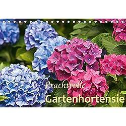 Prachtvolle Gartenhortensie (Tischkalender 2019 DIN A5 quer): Blüten von Hortensien (Monatskalender, 14 Seiten ) (CALVENDO Natur)