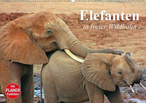 Elefanten in freier Wildbahn (Wandkalender 2020 DIN A2 quer): Mächtige Dickhäuter in...