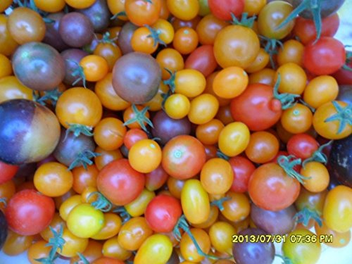 """Ungarische Samen Tomate""""Mix Purple"""" Variation der Besten, von unserer ungarischen Farm samenfest, nur organische Dünger, KEINE Pesztizide"""