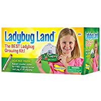 Insect Lore Bug Land Habitat