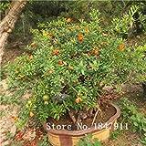seedsown Grande Vente Top 9 e année 30 espèces Mix Graines de Grenade vivaces de Fruits Graines de Jardin Bonsai, Acheter 2-Cadeaux Fleurs Rose...