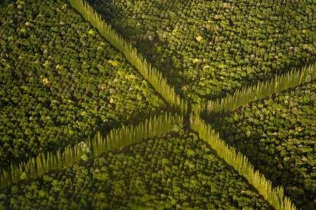 fine-art-print-hi-hilo-de-vista-aerea-de-nueces-de-macadamia-nut-granja-arboles-por-danita-delimont-