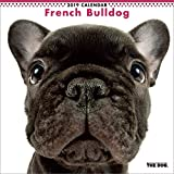 Calendario da parete 2019, The Dog, motivo French bulldog