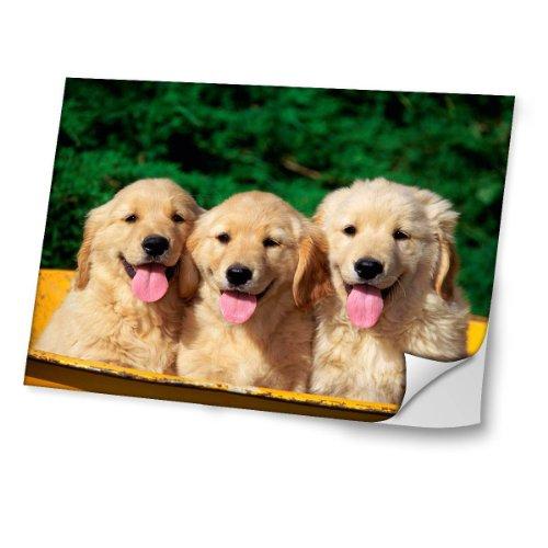 Hunde 10024, Golden Retriever, Skin-Aufkleber Folie Sticker Laptop Vinyl Designfolie Decal mit Ledernachbildung Laminat und Farbig Design für Laptop 13.3