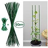 Jane Choi 50 Pezzi Verde canne di Bastoncini di Supporto Perfetto per Coltivare delle Piante, pomodori ed Altre Verdure, 60 cm