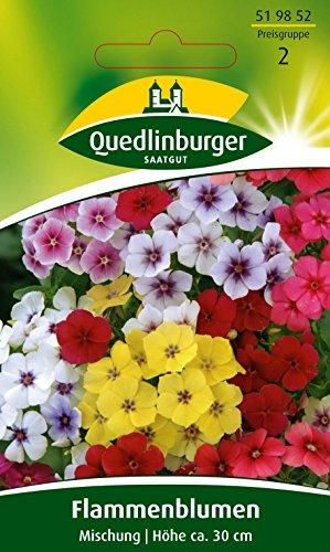 Flammenblume Phlox Mischung QLB Basis Saatgut Blumen einjährig (Liefermenge=4)