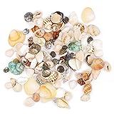 Conchas naturales conchas de playa conchas de boda exhibición manualidades acuario pecera tanque decoración 250 g